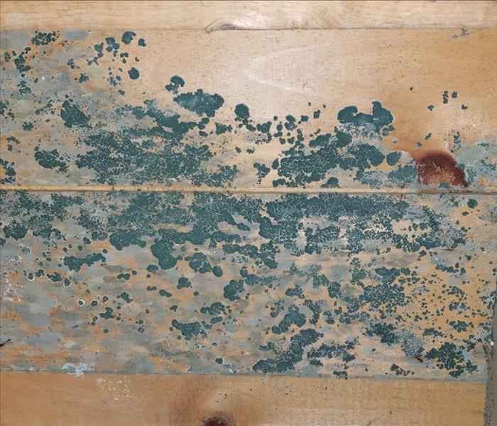 wood panels covered in mold