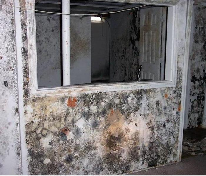 Mold Remediation Some facts about mold