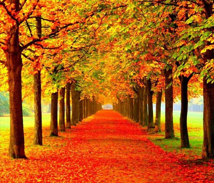 walking path lined with trees covered in beautiful fall leaves