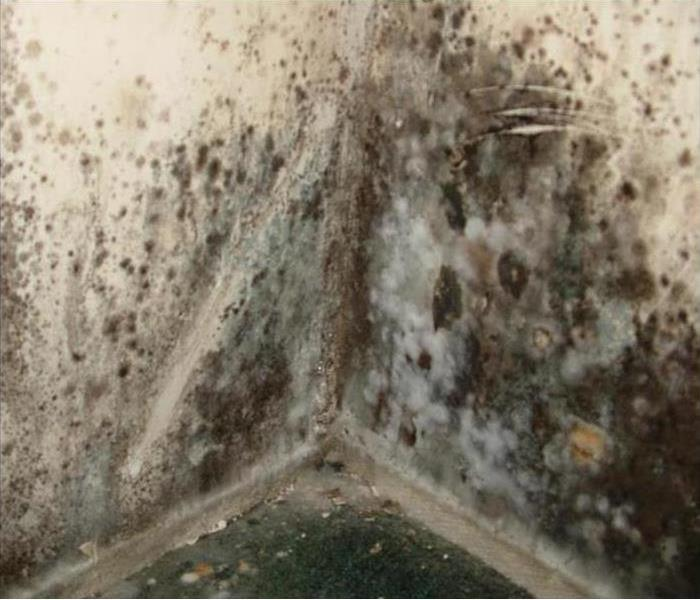 Mold Remediation THIRD SIGN MOLD IS GROWING IN YOUR HOME AFTER A WATER DAMAGE!